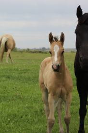 Bayless filly June 2020