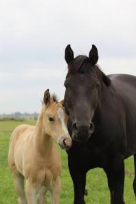 Bayless mare June 2020