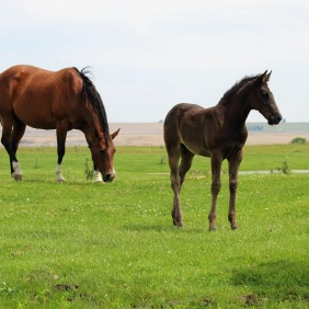 Fres filly May 2020-1