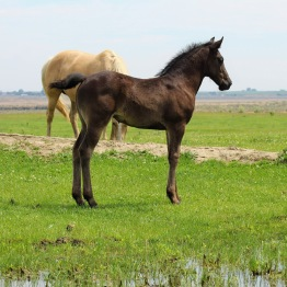 Fres filly May 2020