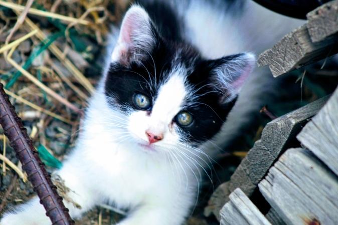 Kitten June 2020
