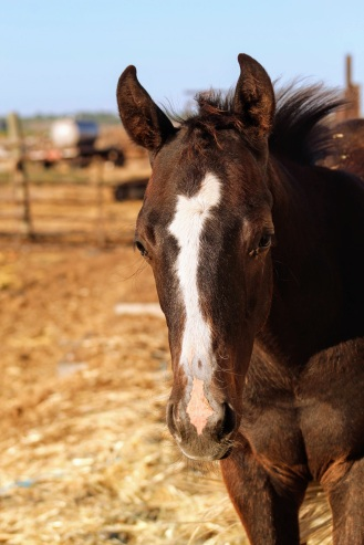 Black colt July 2020