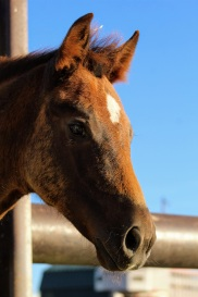 Canadian filly July 2020