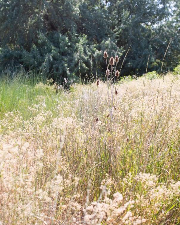 WeedsJuly2020