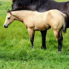 Bayless filly Aug 2020-1