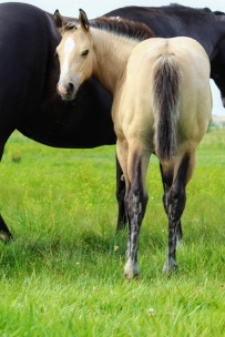 Bayless filly Aug 2020
