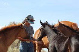 Julia all three foals Aug 2020